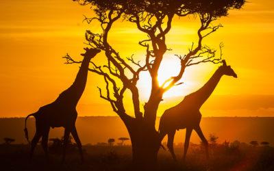 Kenya: Safari Fotografico Parco Nazionale Tsavo Est e Parco Nazionale Amboseli, soggiorno mare a Watamu