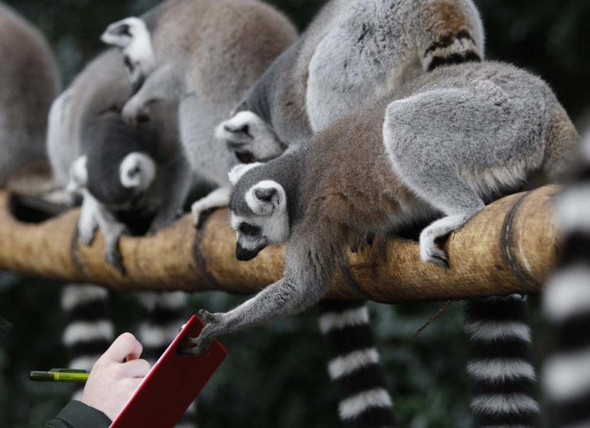 Madagascar 15 giorni