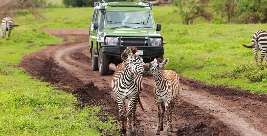 Tanzania: Safari fotografico e Mare a Zanzibar
