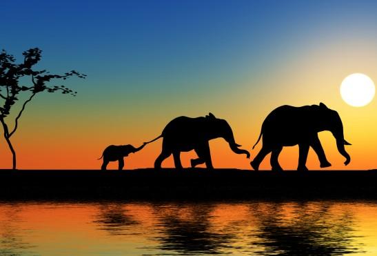 AFRICA – KENIA