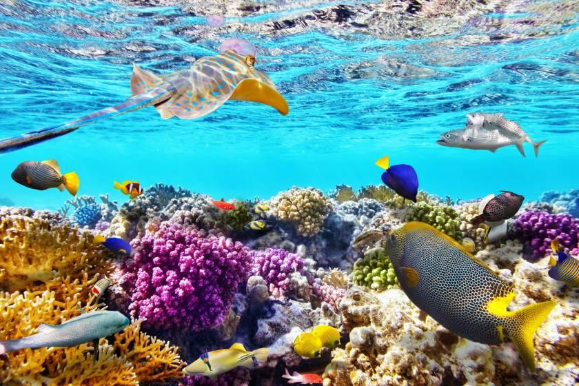 Sharm El Sheikh – Naama Bay