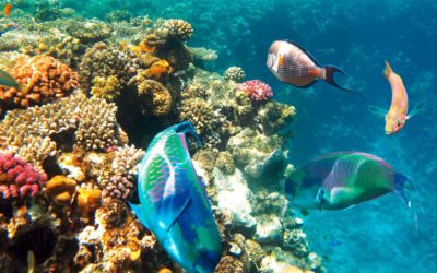 Sharm El Sheikh – Nabq Bay